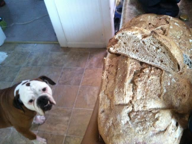 cricket bread with izzy plotting